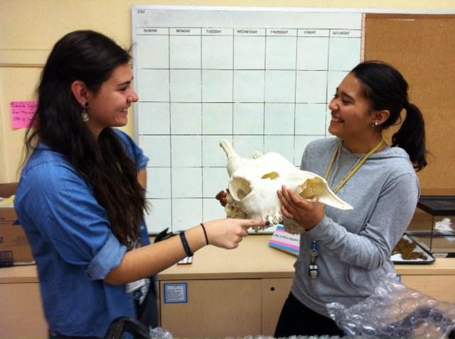 student volunteers with skull