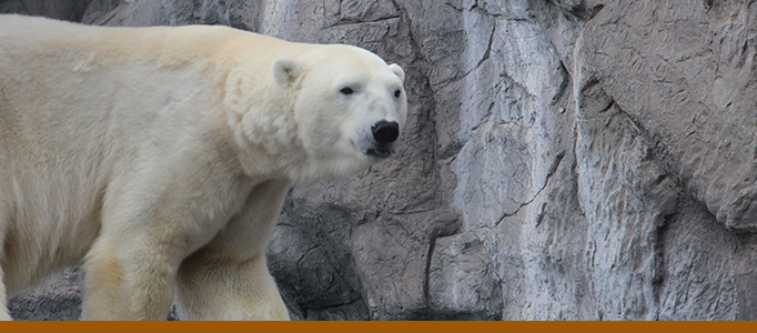Polar bear exhibit banner