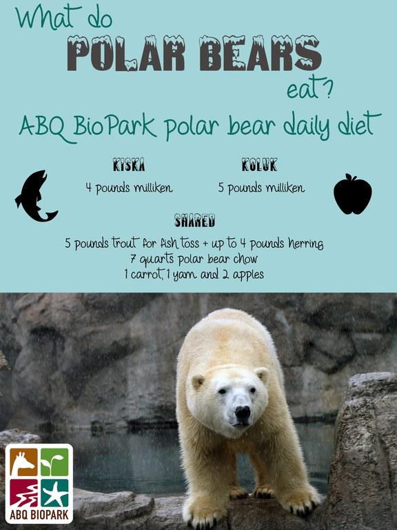 Polar bear diet graphic
