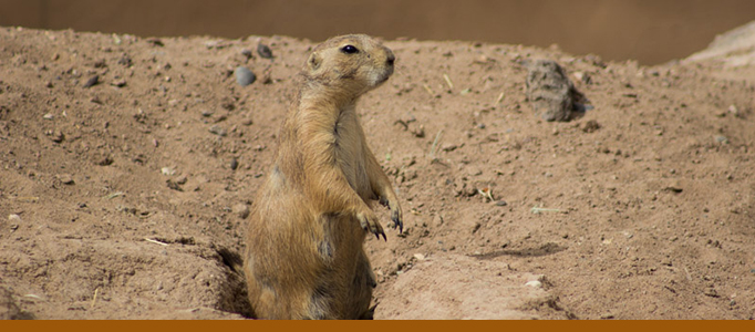Prairie dog exhibit banner