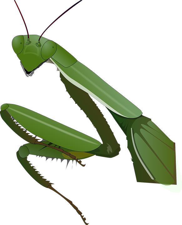 preying mantis clip art