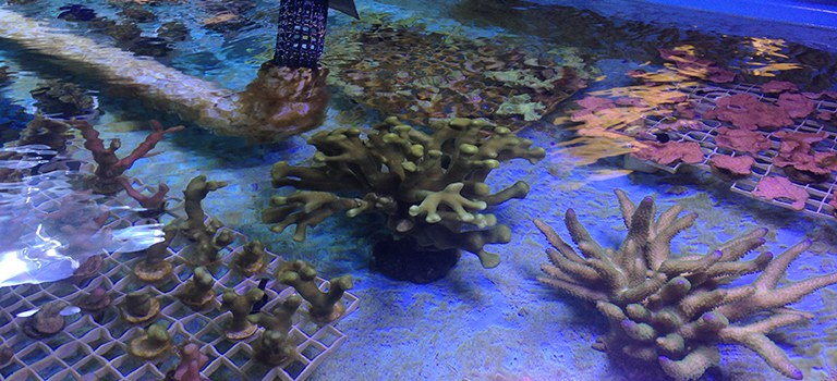 BioPark Research Coral Fragmenting