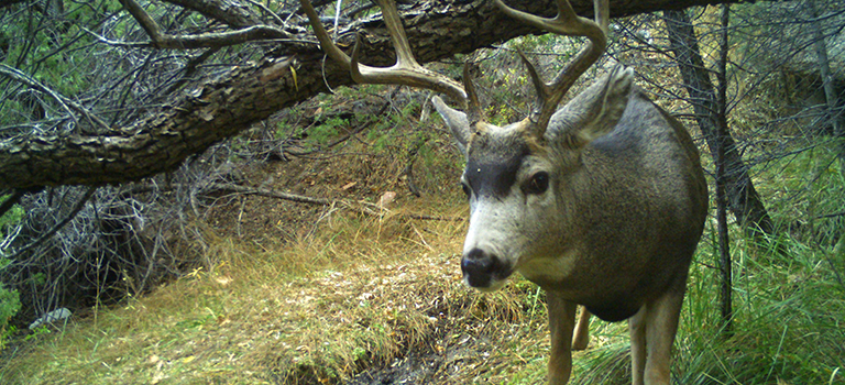 deer-camera-trap-biopark