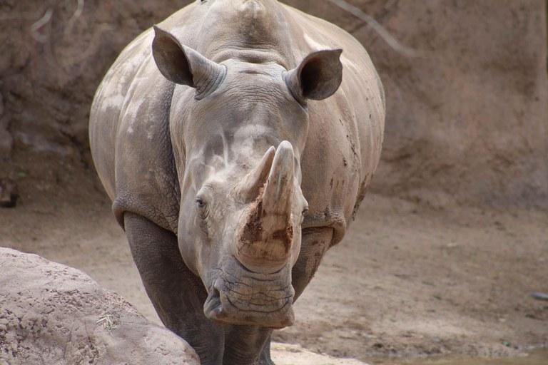 Intro to Rhino BioPark Connect