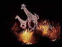 rol-giraffe-lg.jpg