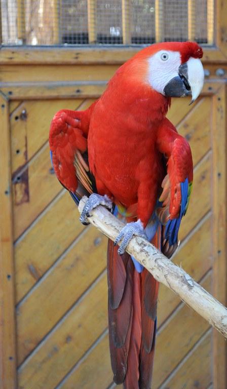 Macaw 2 BioPark Connect Parrots