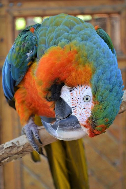 Macaw BioPark Connect Parrots