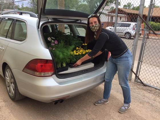 American Friends Service Committee picking up plants at botanic garden, May 2020