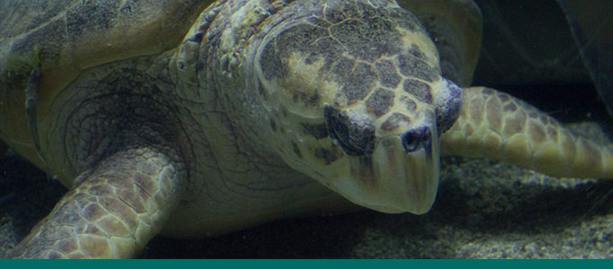 Sea Turtle Aquarium Banner