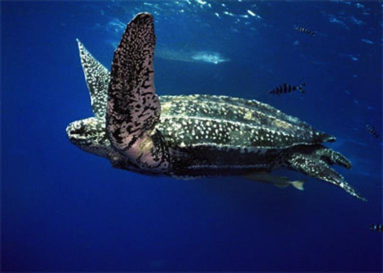 Sea Turtle Stock Image 2