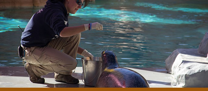 seal and sea lion feeding banner