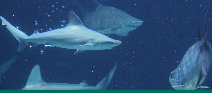 shark banner for aquarium