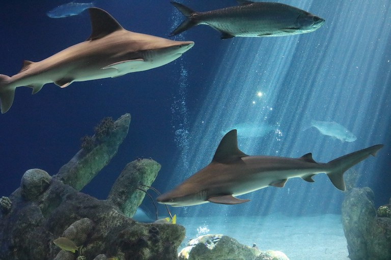 Group of Sharks Swimming at the Aquarium