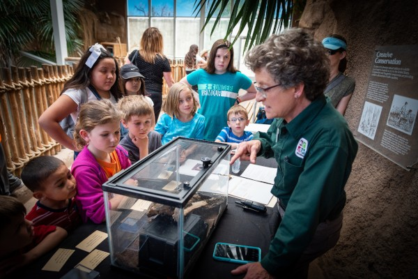 A group of young children looking at a terrarium.