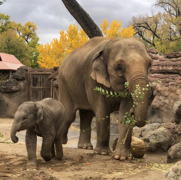 Elephant Herd BioPark Connect