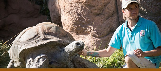 Tortoise Keeper Chats Banner
