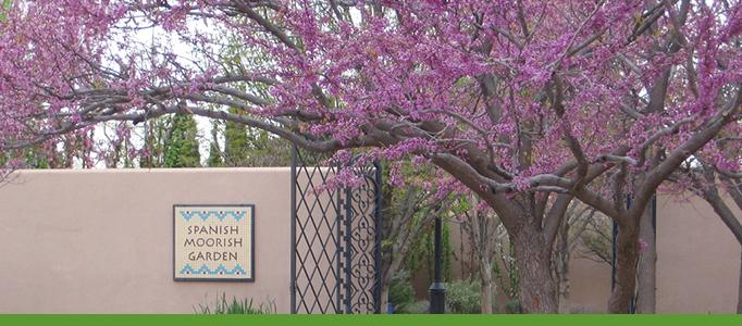 Trees in Garden Banner