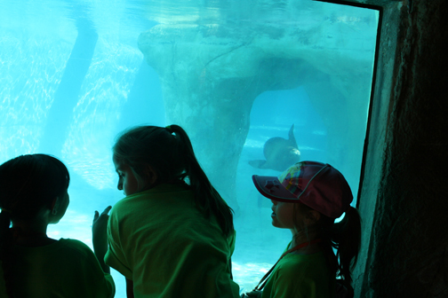 Camp BioPark watching Seals