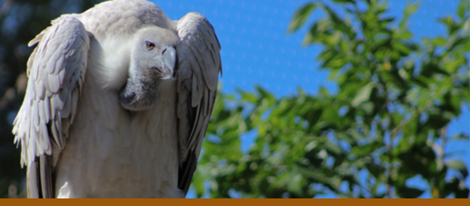 vultures banner for zoo exhibits