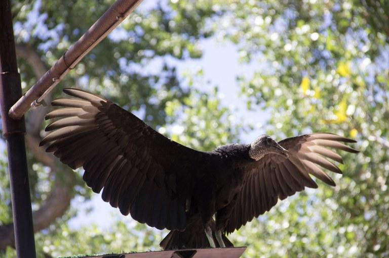 Vulture BioPark Connect Raptors