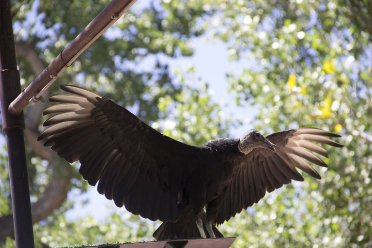 Vulture World Animal Encounters Show
