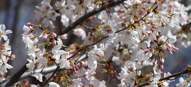 japanese-garden-botanic-garden-flowers