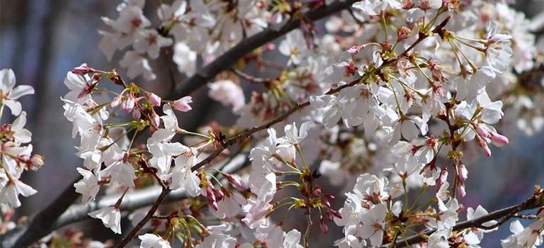 Japanese Garden Flowers Image