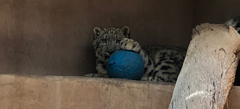 Yeti With a Ball