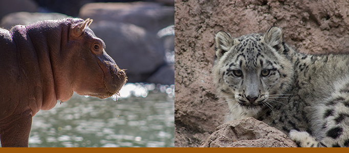 zoo baby banner with Brynn hippo and Karli snow leopard