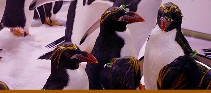 Penguins Banner