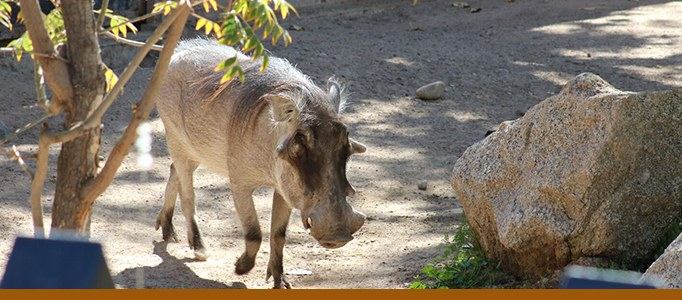 warthog-biopark