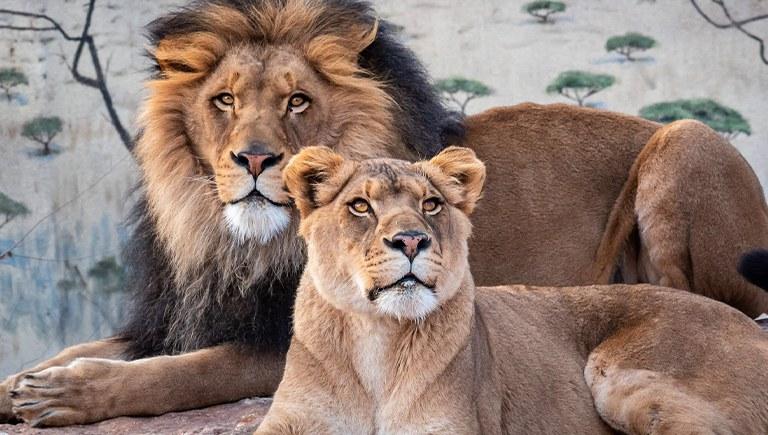 Zoo Image Tile