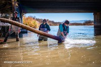 ABQ BioPark Celebrates 20 Years of Rio Grande Silvery Minnow Conservation