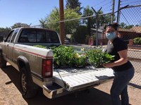 ABQ BioPark Gives Victory Garden Starts to Local Non-Profits for National Public Gardens Week