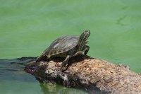 ABQ BioPark helping to save rare New Mexico turtles