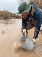ABQ BioPark Releases 15,000  Rio Grande Silvery Minnows into the River