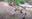 ABQ BioPark Welcomes 7 Baby Lobos