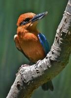 Birds of the Islands