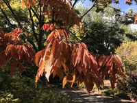 Fall and Winter Busy for Gardeners