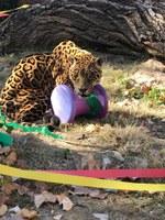 Holiday Gifts for Zoo Animals