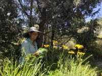 New Curator of Plants Brings Fresh Ideas