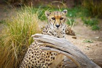 Partnership to Fight Wildlife Trafficking