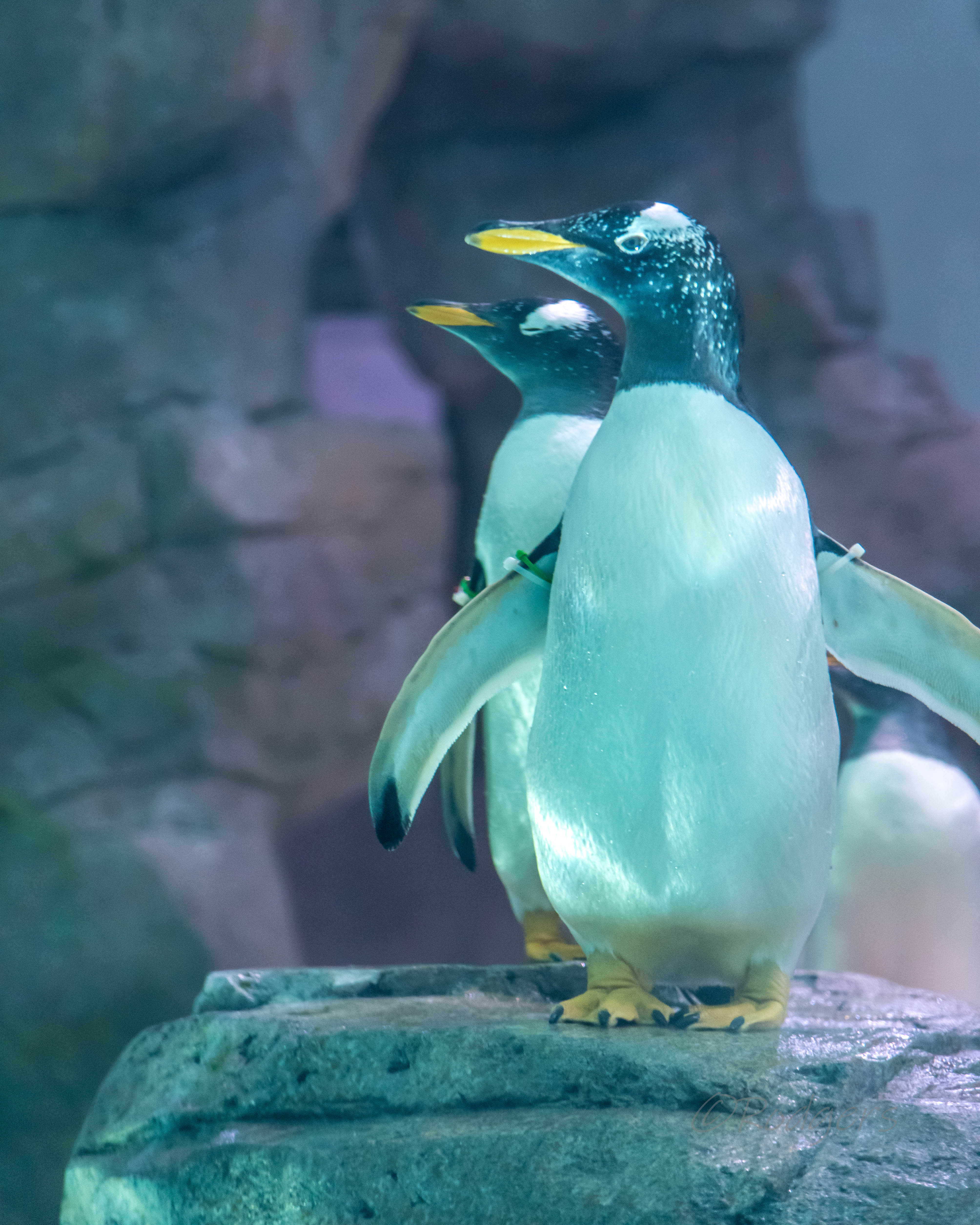 Penguin Chill Grand Opening at the Zoo
