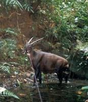 Re-purposed Poaching Snare Program