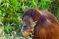 Statement from the ABQ BioPark Concerning Apes
