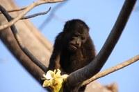 Wildlife Rescues in Costa Rica