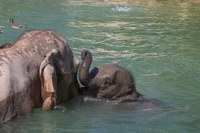 Zoo Partners With TriCore Reference Laboratories for Elephant Prenatal Care