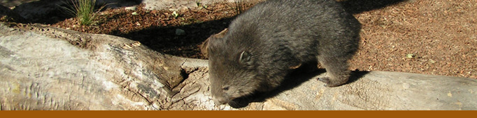 Welcome Wombats! banner