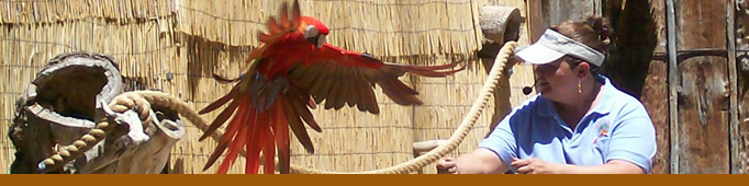A macaw flies to a zookeeper during the World Animal Encounters Show.