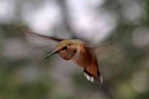Hummingbird at Tingley Beach